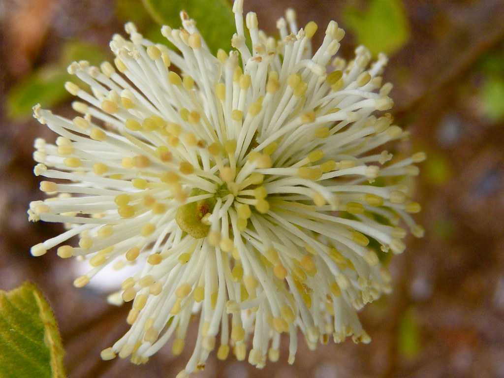 Round flower with yellow tips